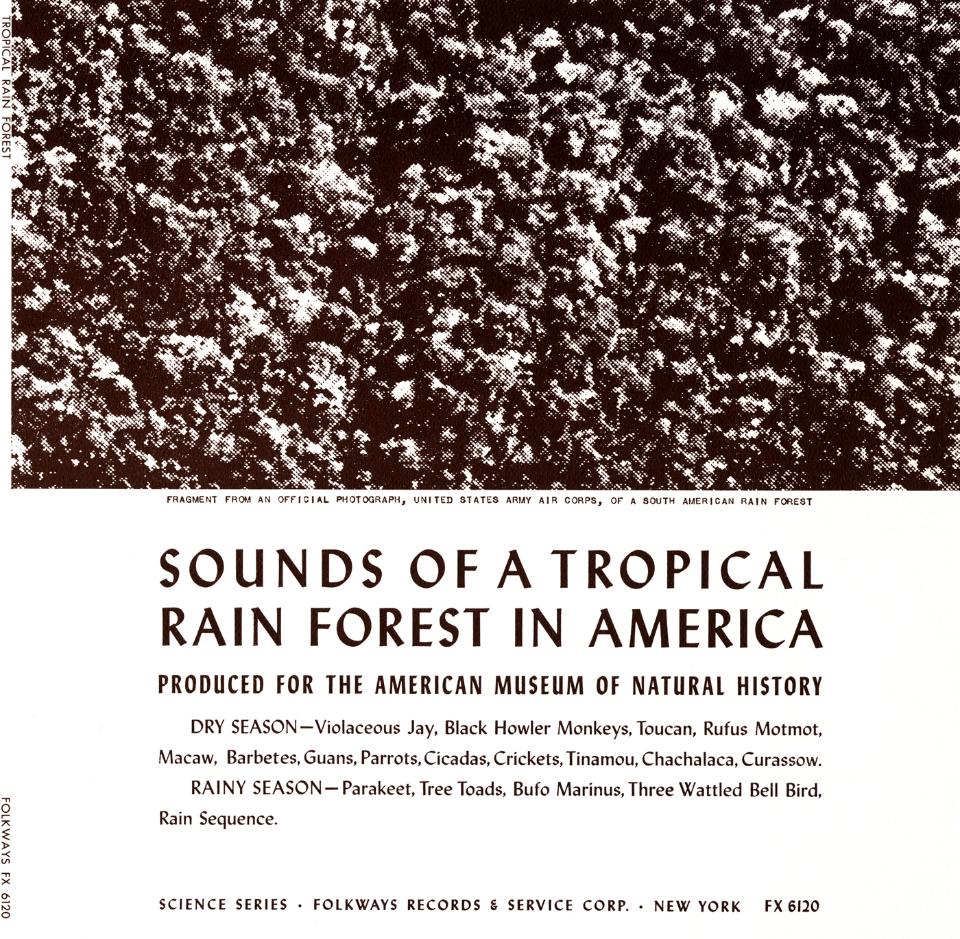 Sounds of a Tropical Rain Forest: Produced for the American Museum