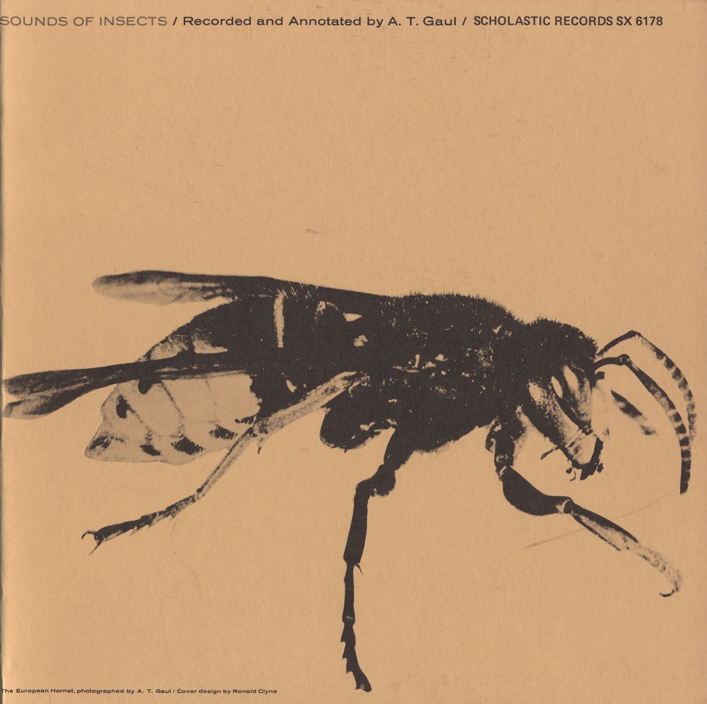 Sounds of Insects | Smithsonian Folkways Recordings