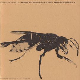 Deerfly (Chrysops niger)