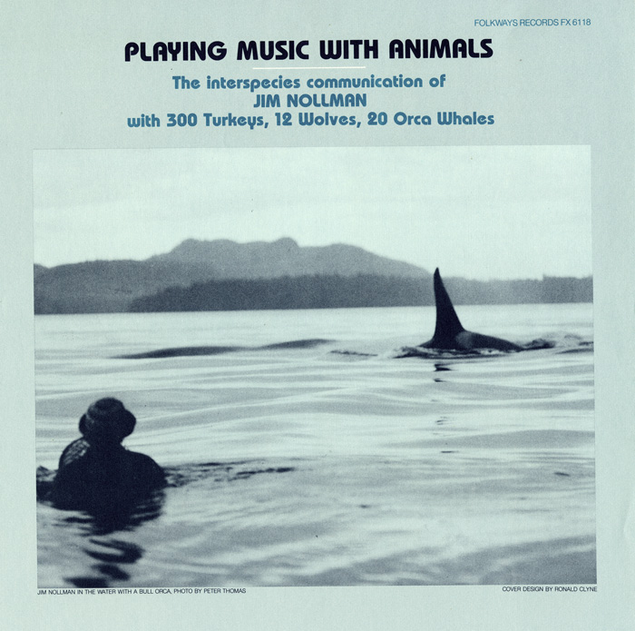 Playing Music with Animals: Interspecies Communication of Jim Nollman with 300 Turkeys, 12 Wolves and 20 Orcas