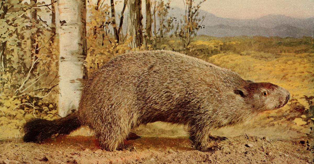 Groundhog Day Smithsonian Folkways Recordings